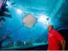 The Deep Aquarium, Hull Source:© VisitBritain / Pawel Libera